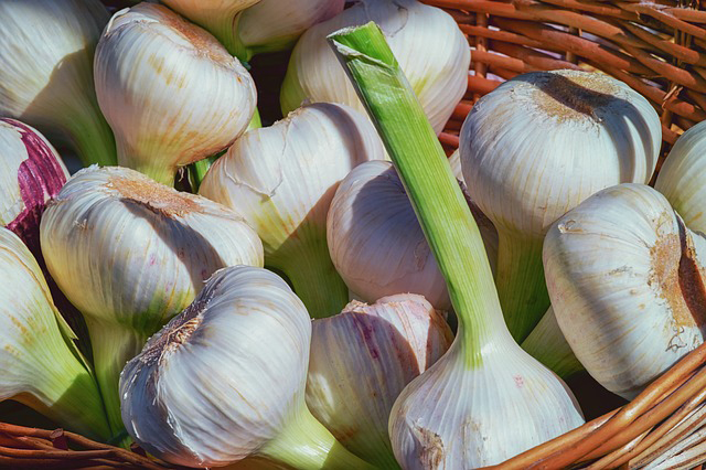 garlic remedy for teeth